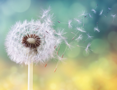 Allergia ai Pollini Primaverili